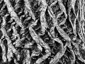 The hard core bark of a tree