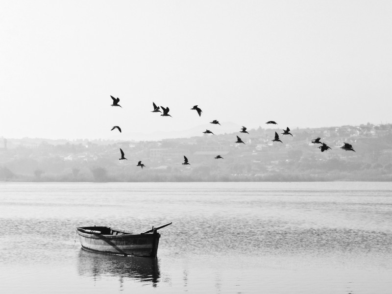 Boat and birds flying over water