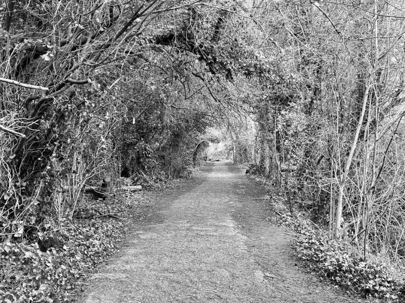 Walking through trees