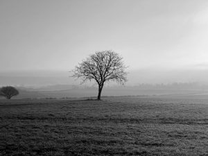 Simplifying complex landscapes through a single tree